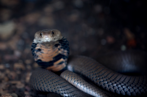 Snake - Durban Photographer